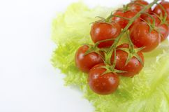 Red tomatoes and green salad leaf Royalty Free Stock Images