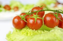 Red tomatoes and green salad leaf Stock Photos