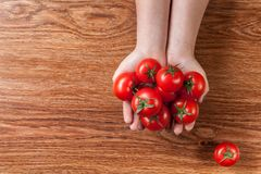 Red tomatoes in hands on wood Royalty Free Stock Image