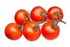 Fresh tomatoes on a green branch isolated on white background. Top view stock photography