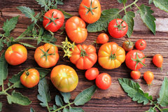 Red tomatoes with leaves Stock Photography