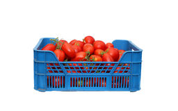 Red tomatoes in a plastic blue box isolated Royalty Free Stock Photos