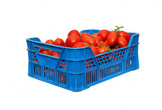Red tomatoes in a plastic blue box isolated Stock Photo