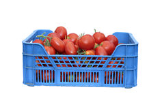 Red tomatoes in a plastic box isolated Stock Images