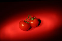 Red Tomatoes on Red Background Stock Image