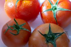 Red tomatoes with selective focus and crop fragment Royalty Free Stock Photography