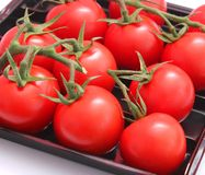 Red Tomatoes Stock Images