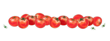 Red Tomatoes. Still Life Many Red Tomatoes on white background. Digital Illustration of vegetable food, cooking royalty free illustration