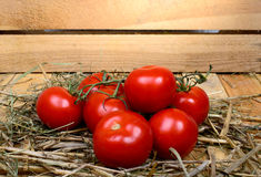 Red tomatoes in straw Stock Image