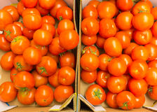 Red tomatoes in supermarket as food background. Retail. Stock Images