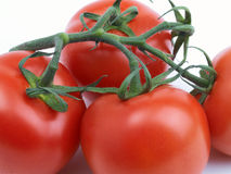 Red tomatoes on vine. Close up of ripe red tomatoes on vine Stock Images