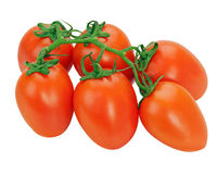 Red tomatoes on the vine isolated on white background Stock Photos