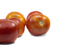 Red tomatoes on white Royalty Free Stock Images