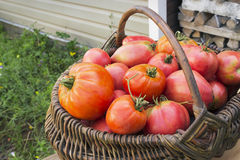Red tomatoes in a wicker basket Royalty Free Stock Photography