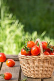 Red tomatoes in wicker basket on  wooden table. Royalty Free Stock Image