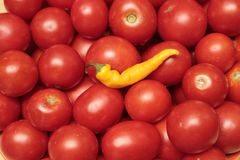 Red tomatoes and yellow pepper, good harvest . royalty free stock photo
