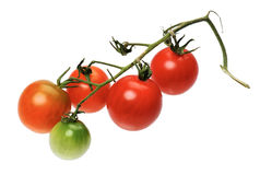 Red tomatto, isolated Royalty Free Stock Photography