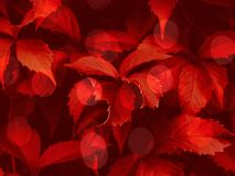 Free Red Toned Bokeh Foliage Trendy Background Royalty Free Stock Photo - 150112015