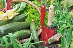 Red tools and vegetables Royalty Free Stock Image