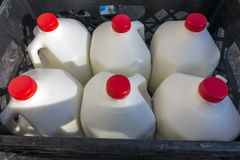 Market gallon of milk delivery. Red top gallon of cow`s milk in crates market royalty free stock photo