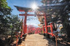 Red Torii gate in Arakura Sengen shrine with mount Fuji in autum. N season Royalty Free Stock Photos