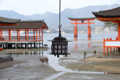 Red torii gate and copper candle lantern. Red floating torii gate outside Itsukushima Shrine at Miyajima at low tide (one of the three most photographed places Stock Photo