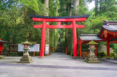 Red Torii gate, stairs and sequoia alley. Hakone shrine Stock Images