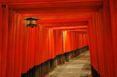 Red torii gates and lantern. Path through red torii gates with a lantern at Fushimi Inari Shrine, Kyoto, Japan Stock Photography