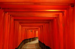 Red torii gates and lantern. Path through red-orange torii gates and a lantern Royalty Free Stock Photography