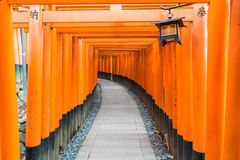 the red torii gates walkway at fushimi inari taisha shrine in Ky Royalty Free Stock Photo