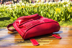 Red tourist backpack and tulip festival Royalty Free Stock Photos