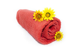Red Towel Rolled Up with 3 Gazanias. Three gazanias positioned on a red rolled up towel, against a plain white and isolating background stock image