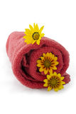 Red Towel Rolled Up with 3 Gazanias. Three gazanias positioned on a red rolled up towel, against a plain white and isolating background stock photo