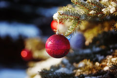 Red toy ball on the Christmas tree in the snowy winter forest Royalty Free Stock Photo