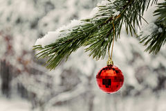 red toy ball hangs on a snowy branch stock photo