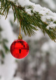 red toy ball hangs on a snowy branch Royalty Free Stock Images