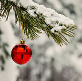 red toy ball hangs on a snowy branch Royalty Free Stock Image