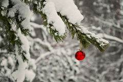 red toy ball hangs on a snowy branch Stock Image