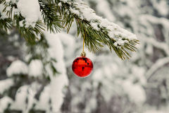 red toy ball hangs on a snowy branch Royalty Free Stock Photography