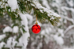 red toy ball hangs on a snowy branch Stock Photos