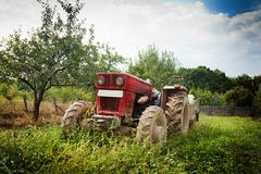 Red tractor. In grass in an orchard Royalty Free Stock Photography