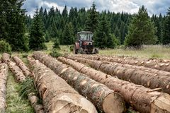 Red Tractor Pulling Tree Logs for Timber Industry. Felling of the Forest. Red Tractor Pulling Tree Logs for Timber Industry. Felling of the Green Forest stock image