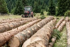 Red Tractor Pulling Tree Logs for Timber Industry. Felling of the Forest. Red Tractor Pulling Tree Logs for Timber Industry. Felling of the Green Forest royalty free stock photography