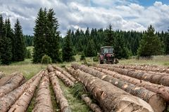 Red Tractor Pulling Tree Logs for Timber Industry. Felling of the Forest. Red Tractor Pulling Tree Logs for Timber Industry. Felling of the Green Forest stock photo