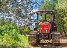 Red Tractor stands in the middle of a grove of olive trees. Italy, Tuscany stock photography