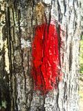 Red Trail Blaze. A vibrant red blaze marks the trail so you don't get Stock Photos