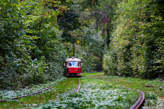 Red tram rides through the trees in park Stock Photography