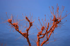 Red tree. Night tree in blue sky Stock Photo