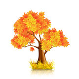 Red Tree. Icon, on the white Stock Photography