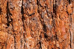 Red tree bark close up for a background. Stock Photo